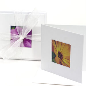greeting-card-small-1-display-with-bow-0701