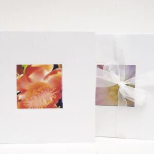 greeting_card_large-display-with-bow-0700