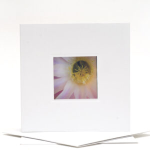 greeting_card_large-single-on-envelopes-0700